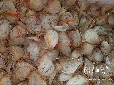 金丝燕种类20
