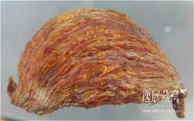 金丝燕种类22