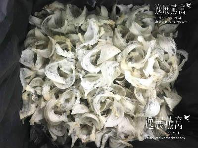 金丝燕种类4