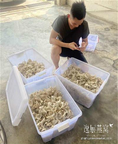 开了燕窝挑毛厂之后该怎么拿燕窝原料货源,跟谁拿的毛燕价格最公道