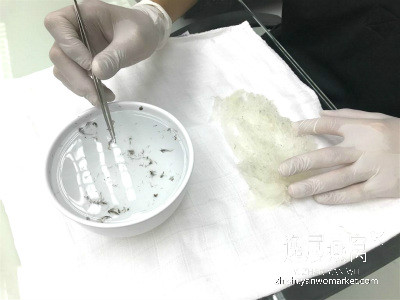 毛燕挑毛过程1
