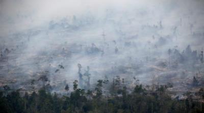 印尼森林大火