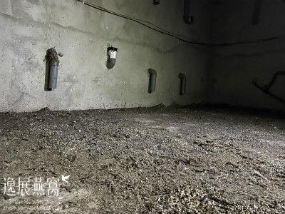 血燕洞燕真假11