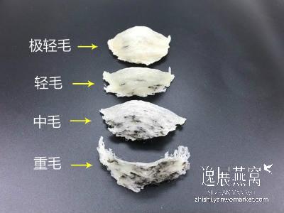 毛燕毛量分类图