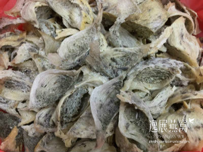 漂白燕窝的原料-发霉燕窝